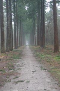 Fraaie lange bomenlanen