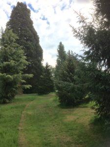 Het Pinetum